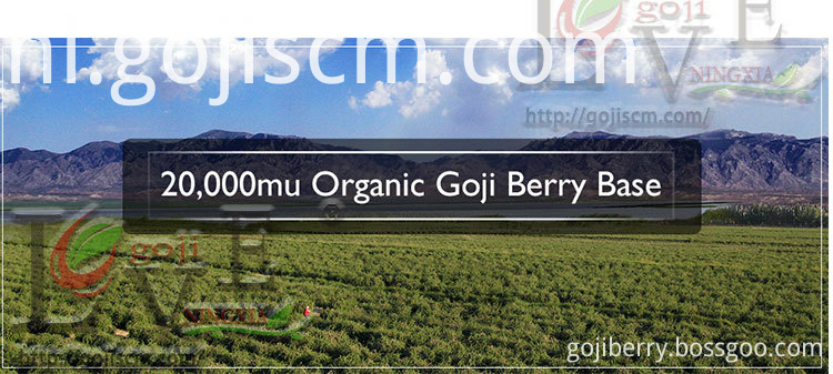 ORGANIC DRIED GOJI BERRY base
