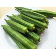 Chinese Cheaper Vegetable Okra
