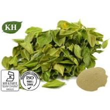100% Natural Buchu Leaf Powder