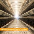 Equipamento galvanizado quente das aves domésticas das séries do quadro 5 do material de H para colocar galinhas / camadas / galinha do ovo