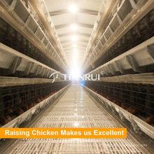 Tianrui Poultry Farming Equipment poulet volaille Cage