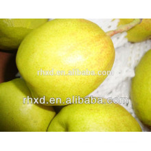 Shanxi fragrant pear to export