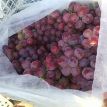 Frische Samen-Trauben-Massen-kernlose Trauben-rote Kugel-Trauben