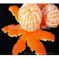 2017 new crop orange with low price
