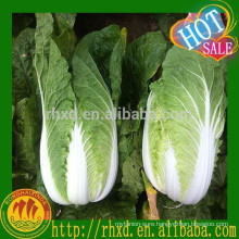 Bulk Fresh Chinese Cabbage