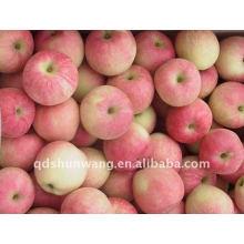 Manzana de gala roja fresca