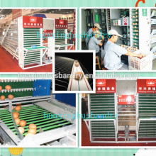 china automatic egg collection system for sale