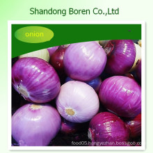 Supply Nature Fresh Red /Yellow Onion in Any Size