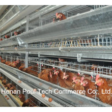 High Quality Material Steel Layer Chicken Cage System