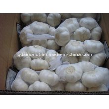 Pure White Knoblauch 5.0cm-5.5cm 500g / 10kg Karton