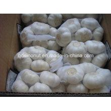 Чистый белый чеснок 5.0cm-5.5cm 500g / 10kg коробка