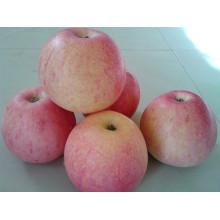 High Quanlity Fresh Qinguan Apple