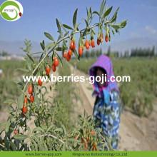 Factory Supply Fruits Bulk Dry Goji Berry