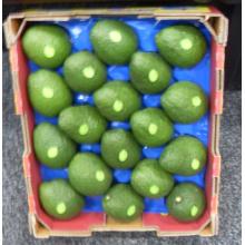 Uso popular de empacotamento da bandeja do fruto da bolha do abacate de 41X33cm no mercado de Austrália