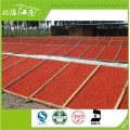 Red new fresh distributor herbal type goji berry