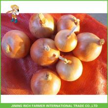 Grade eine frische Zwiebel Ernte Gelbe Zwiebel