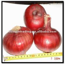 Oignon rouge aux légumes frais