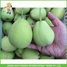15Kg Carton 60/70/80/90/100/110 Pera fresca de Shandong