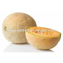 MSM131 Xinzao high quality golden musk melon seeds hybrid sweet melon seeds