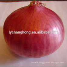 New crop red onion of 5-7cm, 6-8cm, 8cm up