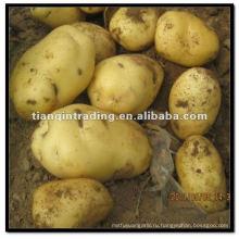 замороженные свежий картофель