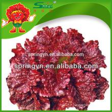 ICEBERG LETTUCE - légumes à feuilles organiques