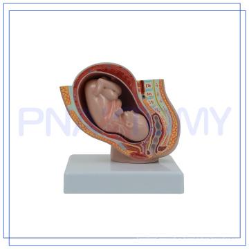 PNT-0581-1 mini pregnancy pelvis model
