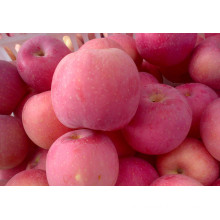 Fresh FUJI Apple with Competitive Price