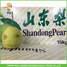 Qualidade Chinesa Pera Shandong Fresco