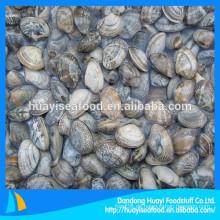 Export lokaler Spezialität Meeresfrüchte gefrorene kurze Halsmuschel