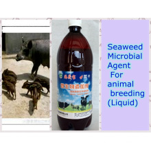 Agente biológico de algas marinas utilizado para aditivos alimentarios