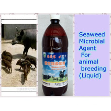 seaweed biological Agent Used for Feed Additive