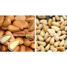 gansu price favorable pine nuts