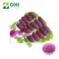 Purple Swtee Potato Colour