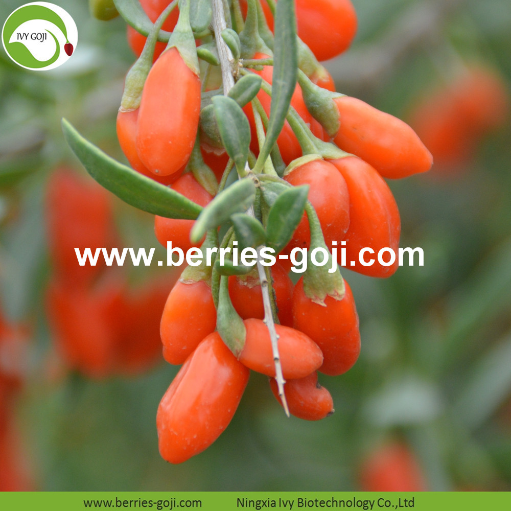 natural goji berries
