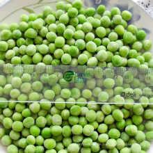 Qualitativ hochwertige IQF gefrorene grüne Erbsen