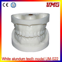 Umg White Alundum Teeth Model/Standard Dental Teeth Model