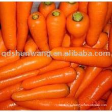 Свежий морковь