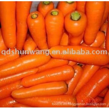 Zanahoria fresca