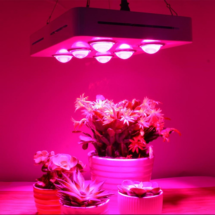 grow light fixtures