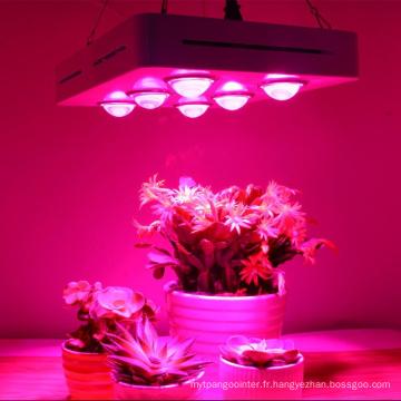 600W élèvent la lumière pour les herbes hydroponiques