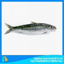 Boa qualidade congelados sardinha por atacado