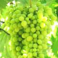 Fertilizante Aminoácido Líquido