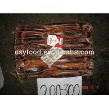 frozen illex squid(lllex Argentinus)