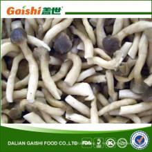 IQF Frozen Pleurotus Cornucopiae / Shimeji Mushroom