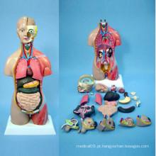 Modelo de corpo de anatomia humana para ensino médico