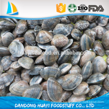 promotion 2016 new arrival short necked clam with special price