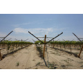 metal post rollformer orchard vineyard pole manufacturing machine