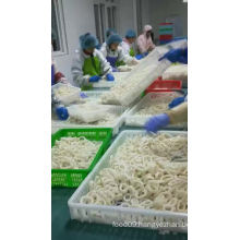 Frozen squid ring good price with EU approval