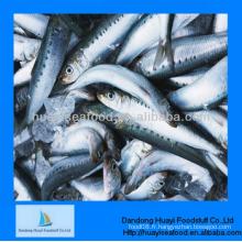 Fruits de mer de sardine congelés au poisson fournisseur de qualité fine